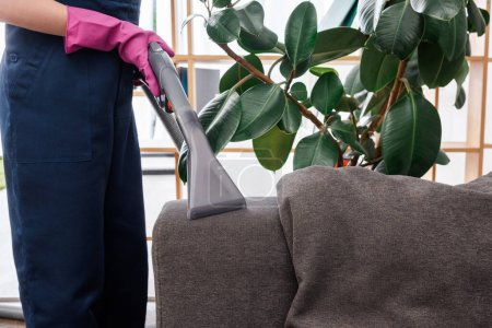 Photo for Cropped view of cleaner in rubber glove using vacuum cleaner on couch upholstery - Royalty Free Image
