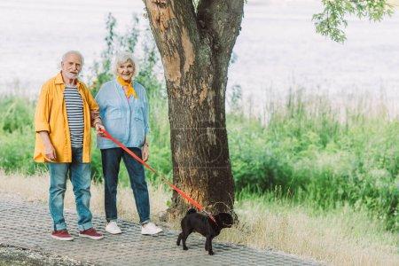 Photo pour Couple âgé souriant marchant avec chiot en laisse dans le parc - image libre de droit