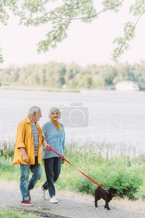 Photo pour Souriant homme âgé regardant femme tout en marchant avec chiot chiot en laisse dans le parc - image libre de droit