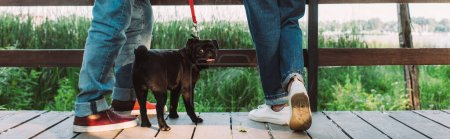 Panoramic crop of pug dog on leash standing near elderly couple on bridge in park