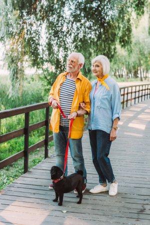 Photo pour Couple âgé souriant avec chien chiot en laisse marchant sur un pont en bois dans le parc en été - image libre de droit
