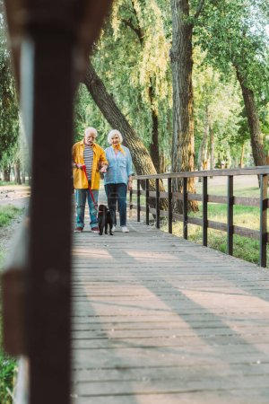 Photo for Selective focus of positive senior couple strolling with pug dog on leash on bridge in park - Royalty Free Image
