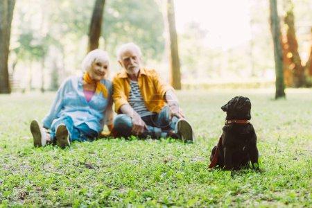 Photo pour Foyer sélectif de chiot chiot assis près positif couple aîné sur l'herbe dans le parc - image libre de droit
