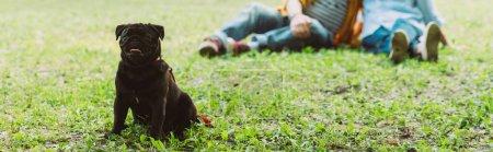 Photo pour Récolte horizontale de chiot chiot assis sur l'herbe avec un couple âgé en arrière-plan dans le parc - image libre de droit