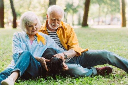 Photo pour Concentration sélective de chiot chiot chiot chiot couple âgé positif sur l'herbe dans le parc - image libre de droit