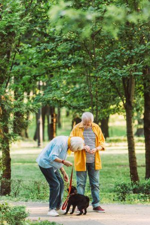 Photo pour Concentration sélective du couple de personnes âgées jouant avec le chien chiot dans le parc à l'été - image libre de droit