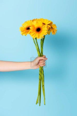 Photo pour Vue recadrée de la femme tenant des fleurs jaunes sur bleu - image libre de droit