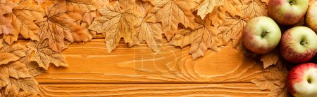 Photo for Top view of ripe apples and autumnal foliage on wooden background, panoramic shot - Royalty Free Image