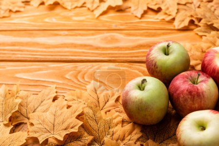 Photo for Ripe apples and autumnal foliage on wooden background - Royalty Free Image