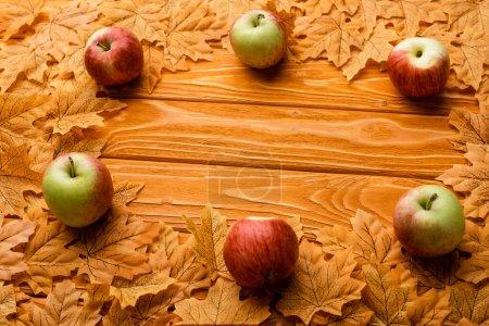 Photo pour Ripe apples and autumnal foliage on wooden background - image libre de droit