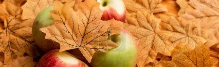 Photo pour Foyer sélectif de pommes mûres savoureuses et feuille d'automne, plan panoramique - image libre de droit
