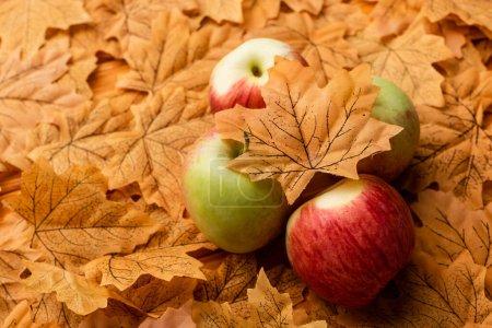 Photo pour Selective focus of ripe tasty apples and autumnal leaf - image libre de droit