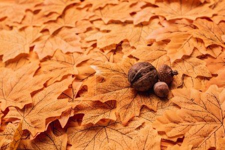Photo pour Noix et glands sur fond de feuillage automnal doré - image libre de droit