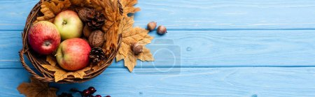 Photo for Top view of autumnal wicker basket with apples, nuts and cones on blue wooden background, panoramic shot - Royalty Free Image