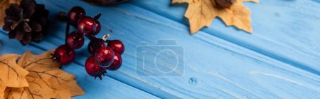 autumnal leaves, berries and cone on blue wooden background, panoramic shot