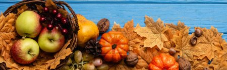 Photo for Top view of autumnal harvest in basket and foliage on blue wooden background, panoramic shot - Royalty Free Image