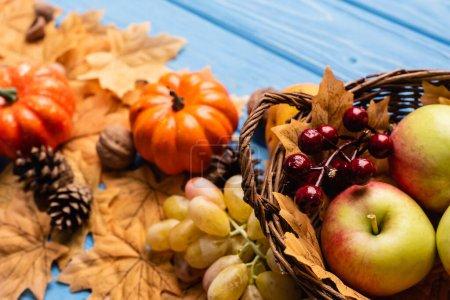 Photo pour Foyer sélectif de la récolte automnale dans le panier et le feuillage sur fond de bois bleu - image libre de droit