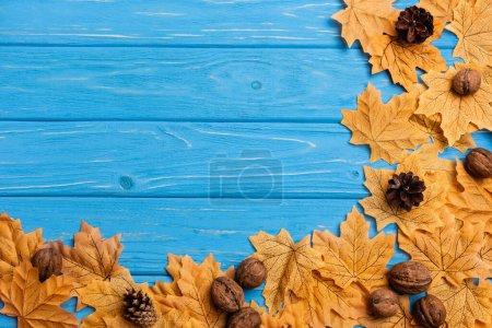 Photo pour Vue de dessus du feuillage automnal avec des noix et des cônes sur fond de bois bleu - image libre de droit