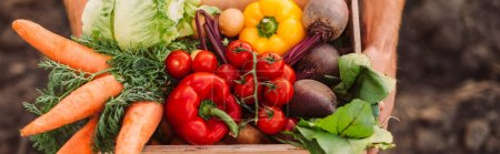 Photo for Cropped view of farmer holding box full of ripe, fresh vegetables, website header - Royalty Free Image