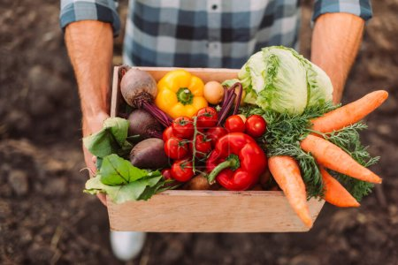Photo for High angle view of farmer holding wooden box with fresh, ripe vegetables - Royalty Free Image