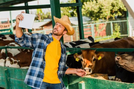 Photo for Farmer in plaid shirt and straw hat taking selfie with cows on digital tablet - Royalty Free Image