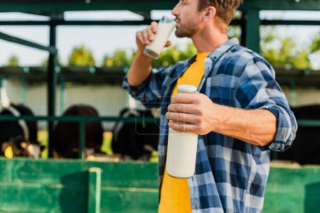 Photo for Selective focus of farmer in plaid shirt holding bottle while drinking fresh milk - Royalty Free Image