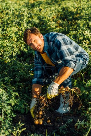 high angle view of farmer in plaid shirt and rubber gloves holding potato plant with tubers while looking at camera