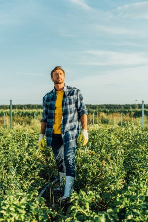 Photo for Farmer in rubber boots, work gloves and plaid shirt standing in field and looking away - Royalty Free Image