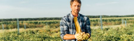 Photo for Horizontal image of farmer in checkered shirt and gloves holding fresh potatoes while standing on field - Royalty Free Image