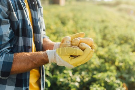 vue recadrée de l'agriculteur en chemise à carreaux et gants tenant des pommes de terre fraîches dans des mains coupées
