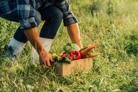 Photo for Partial view of rancher in rubber boots touching box full of ripe, fresh vegetables - Royalty Free Image
