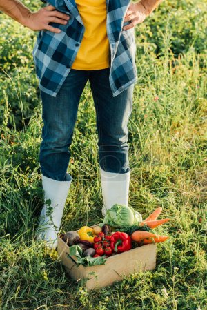 Photo for Cropped view of farmer in rubber boots standing with hands on hips near box with fresh vegetables - Royalty Free Image