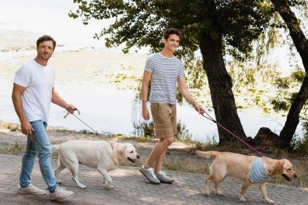 Photo pour Père et fils tenant des laisses tout en marchant avec des récupérateurs d'or près du lac - image libre de droit