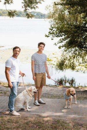 Photo pour Père et fils tenant des laisses tout en se tenant debout avec des récupérateurs d'or près du lac - image libre de droit