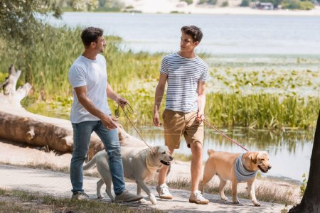 Photo pour Père et fils se regardant et tenant des laisses tout en marchant avec des récupérateurs d'or près du lac - image libre de droit