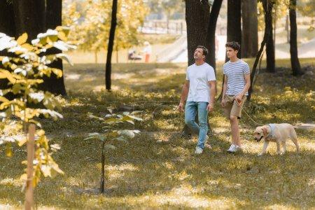 Photo pour Homme regardant vers le haut près de fils adolescent marchant dans le parc avec golden retriever - image libre de droit