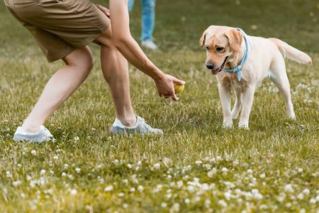 Photo pour Cropped view of teenager boy holding ball near dog in park - image libre de droit