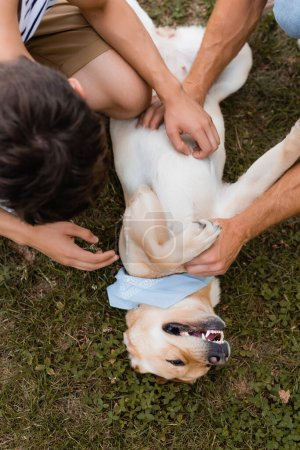 top view of father and son cuddling golden retriever on grass