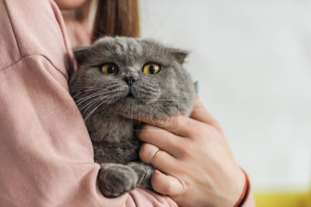 cropped shot of woman carrying cute scottish fold cat