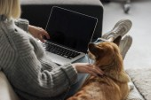 cropped shot of woman working with laptop at home while her corgi dog lying beside
