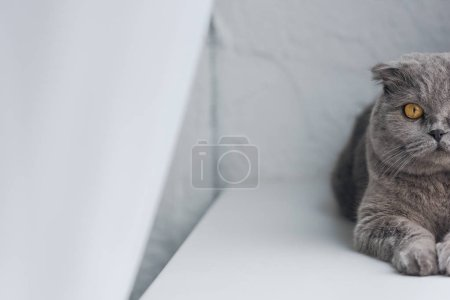 cropped shot of adorable grey cat lying on windowsill and looking at camera