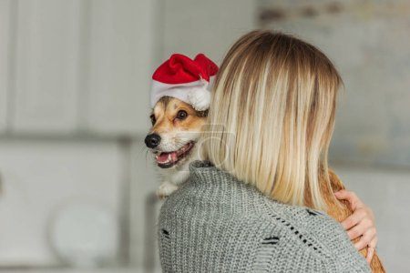 close-up shot of young woman carrying cute corgi dog in santa hat at home
