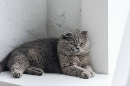close-up shot of adorable grey cat sleeping on windowsill