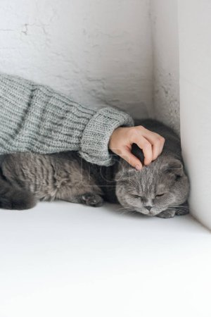 cropped shot of woman petting unhappy grey cat while he sleeping on windowsill