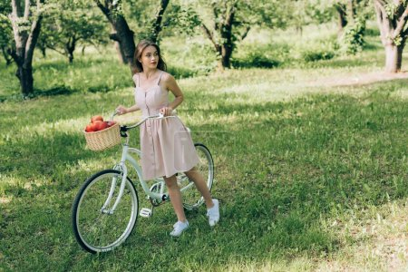 pretty young woman in dress holding retro bicycle with wicker basket full of ripe apples at countryside