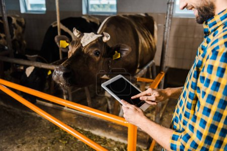 cropped image of farmer using tablet in stable with cows