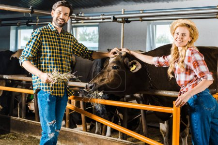 couple of farmers palming cow in stable and looking at camera
