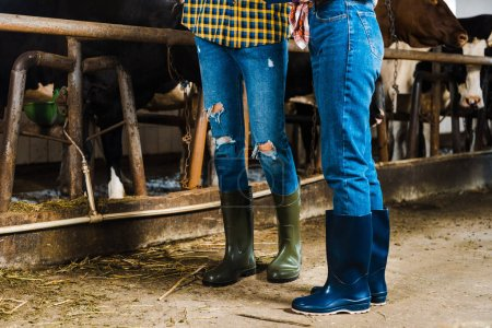 cropped image of couple of farmers standing in stable in rubber boots