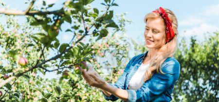attractive farmer touching apple on tree in garden