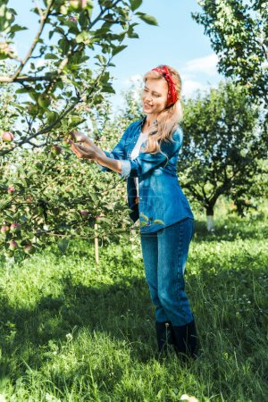 beautiful farmer checking ripe apple on tree in garden